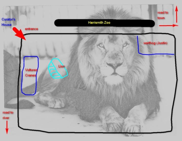 zoo-lion-2