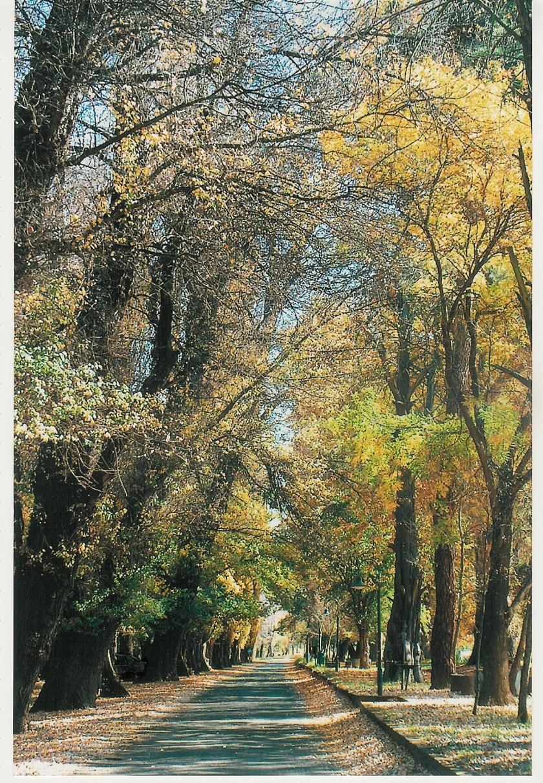 Harrismith Park (7)