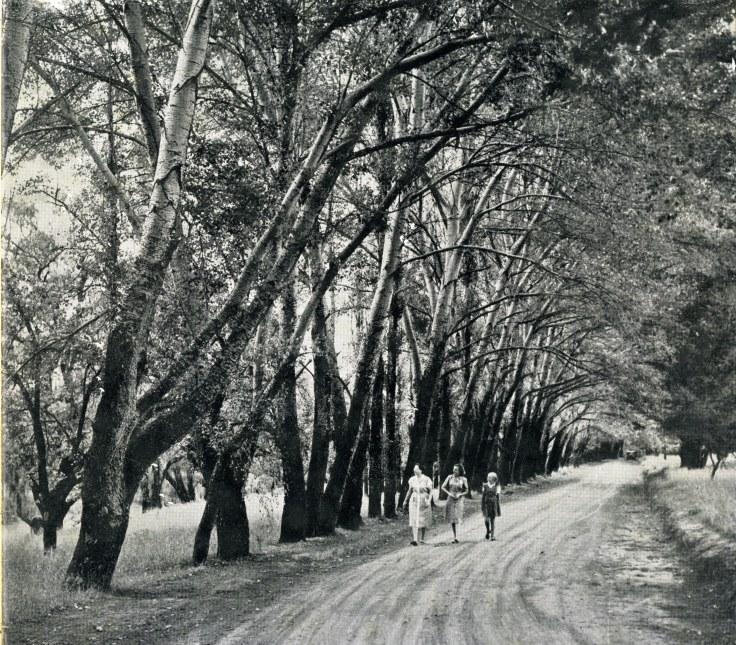 Harrismith Park (2)