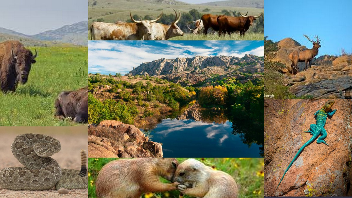 Oklahoma's Wichita Mountains